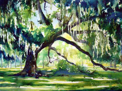 live oak watercolor painting Watercolor Painting by Jennifer Branch.