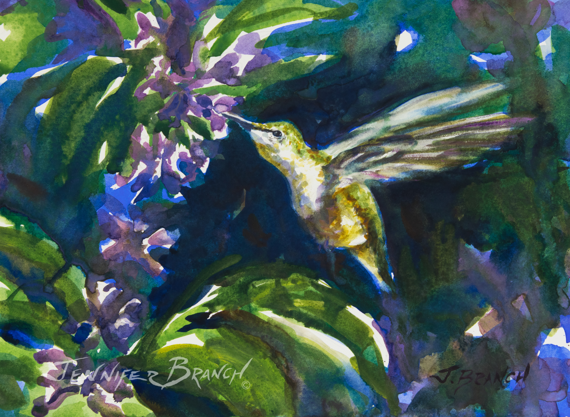 Hummingbird and a salvia flower watercolor painting  by Jennifer Branch